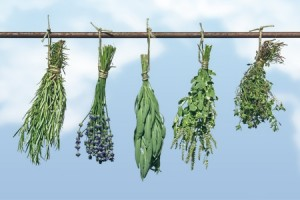 Herbs to Prevent Cancer